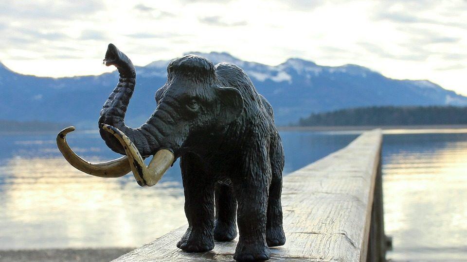 Пакет с10кг костей мамонта изъят упассажира ваэропорту Красноярска